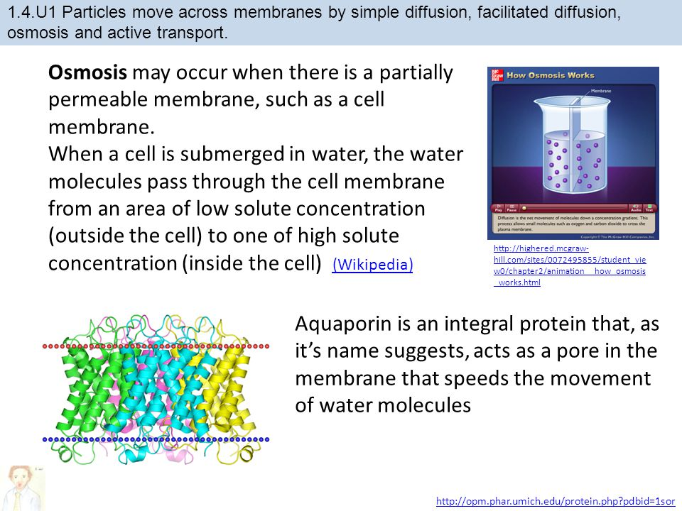 Osmosis may occur when there is a partially permeable membrane, such as a cell membrane.