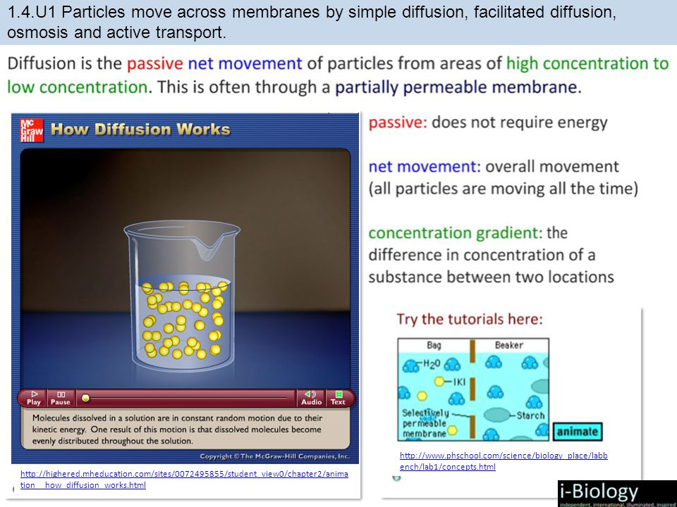 http://highered.mheducation.com/sites/0072495855/student_view0/chapter2/anima tion__how_diffusion_works.html http://www.phschool.com/science/biology_place/labb ench/lab1/concepts.html
