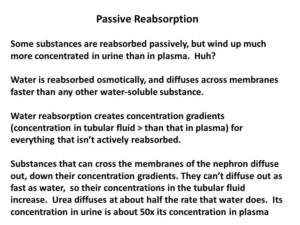 Passive Reabsorption Some substances are reabsorbed passively, but wind up much more concentrated in urine than in plasma. Huh? Water is reabsorbed os