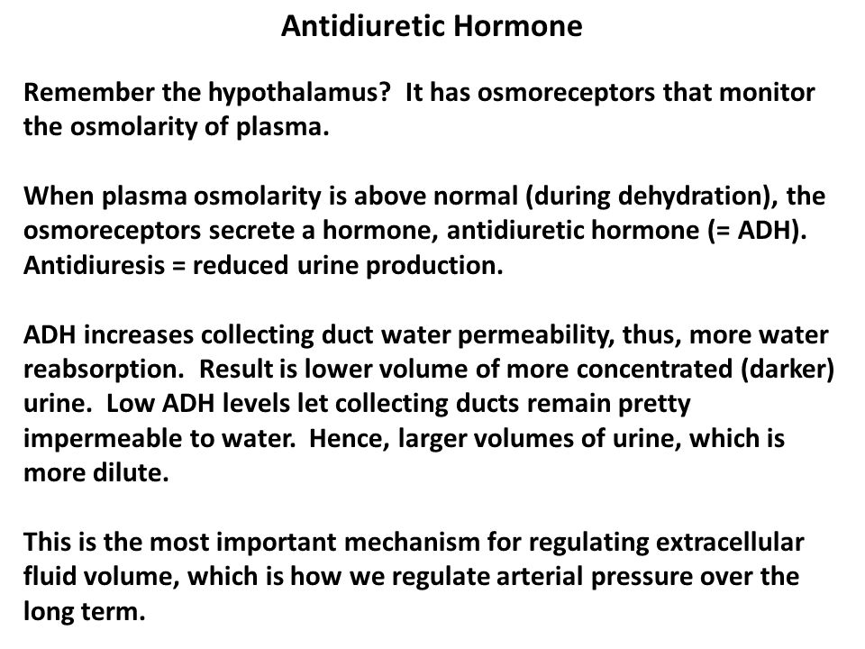Antidiuretic Hormone Remember the hypothalamus? It has osmoreceptors that monitor the osmolarity of plasma. When plasma osmolarity is above normal (du