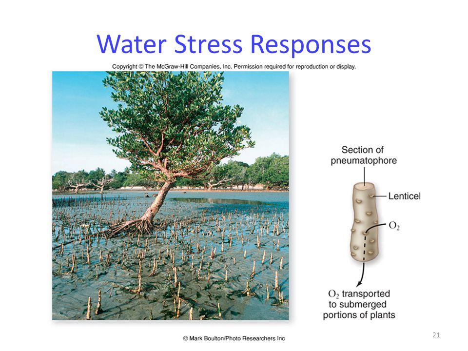 21 Water Stress Responses