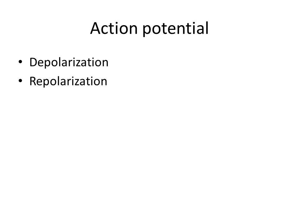 Action potential Depolarization Repolarization