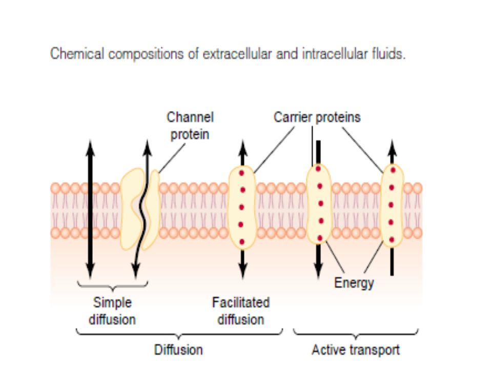 Diffusion through the cell membrane is divided into two subtypes called simple diffusion and facilitated diffusion.