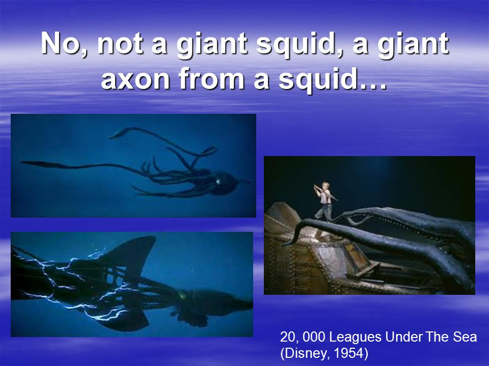 No, not a giant squid, a giant axon from a squid… 20, 000 Leagues Under The Sea (Disney, 1954)