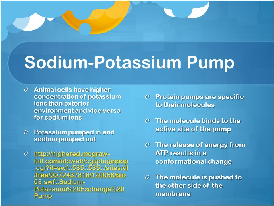 Sodium-Potassium Pump Animal cells have higher concentration of potassium ions than exterior environment and vice versa for sodium ions Potassium pumped in and sodium pumped out http://highered.mcgraw- hill.com/olcweb/cgi/pluginpop.cgi it=swf::535::535::/sites/dl /free/0072437316/120068/bio 03.swf::Sodium- Potassium%20Exchange%20 Pump http://highered.mcgraw- hill.com/olcweb/cgi/pluginpop.cgi it=swf::535::535::/sites/dl /free/0072437316/120068/bio 03.swf::Sodium- Potassium%20Exchange%20 Pump Protein pumps are specific to their molecules The molecule binds to the active site of the pump The release of energy from ATP results in a conformational change The molecule is pushed to the other side of the membrane