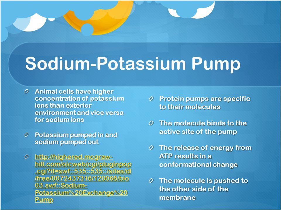 Sodium-Potassium Pump Animal cells have higher concentration of potassium ions than exterior environment and vice versa for sodium ions Potassium pump
