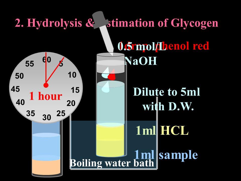 1ml HCL 2. Hydrolysis & Estimation of Glycogen Boiling water bath 60 30 15 45 5 10 20 2535 40 50 55 1 hour 1drop phenol red 0.5 mol/L NaOH 1ml sample