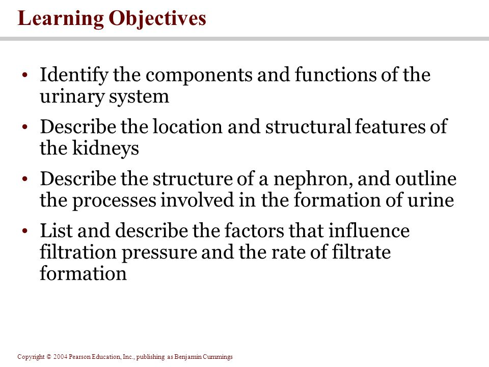 Copyright © 2004 Pearson Education, Inc., publishing as Benjamin Cummings Learning Objectives Identify the components and functions of the urinary system Describe the location and structural features of the kidneys Describe the structure of a nephron, and outline the processes involved in the formation of urine List and describe the factors that influence filtration pressure and the rate of filtrate formation