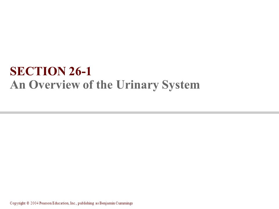Copyright © 2004 Pearson Education, Inc., publishing as Benjamin Cummings SECTION 26-1 An Overview of the Urinary System