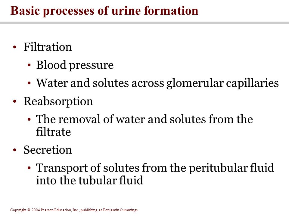 Copyright © 2004 Pearson Education, Inc., publishing as Benjamin Cummings Filtration Blood pressure Water and solutes across glomerular capillaries Reabsorption The removal of water and solutes from the filtrate Secretion Transport of solutes from the peritubular fluid into the tubular fluid Basic processes of urine formation