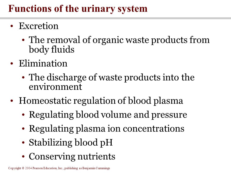Copyright © 2004 Pearson Education, Inc., publishing as Benjamin Cummings Excretion The removal of organic waste products from body fluids Elimination