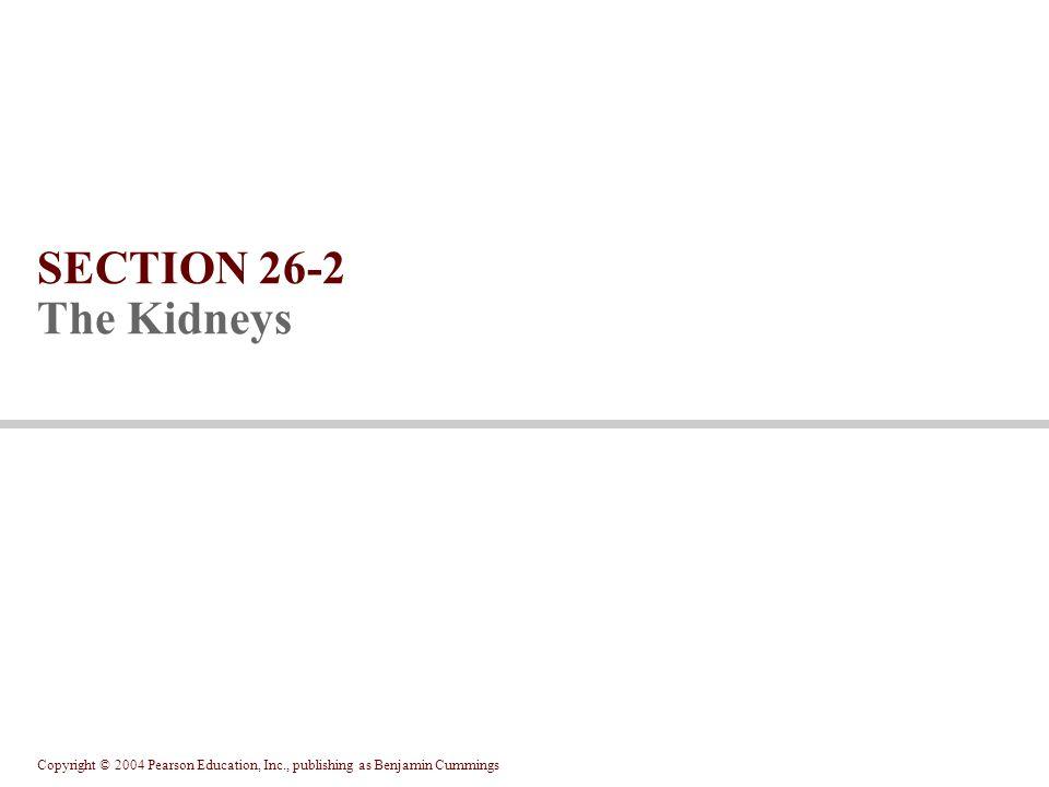 Copyright © 2004 Pearson Education, Inc., publishing as Benjamin Cummings SECTION 26-2 The Kidneys