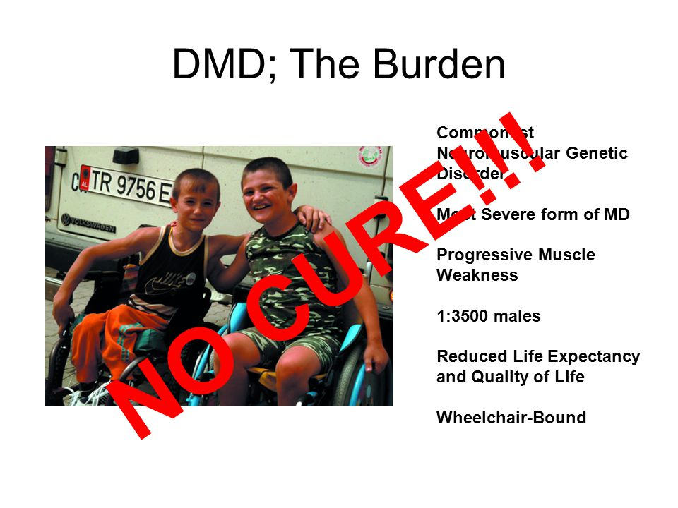 DMD; The Burden Commonest Neuromuscular Genetic Disorder Most Severe form of MD Progressive Muscle Weakness 1:3500 males Reduced Life Expectancy and Quality of Life Wheelchair-Bound NO CURE!!!