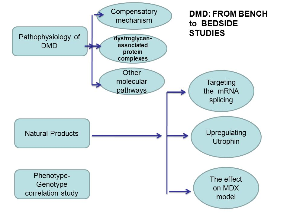 Pathophysiology of DMD Natural Products Phenotype- Genotype correlation study Targeting the mRNA splicing Upregulating Utrophin The effect on MDX model Compensatory mechanism dystroglycan- associated protein complexes Other molecular pathways DMD: FROM BENCH to BEDSIDE STUDIES