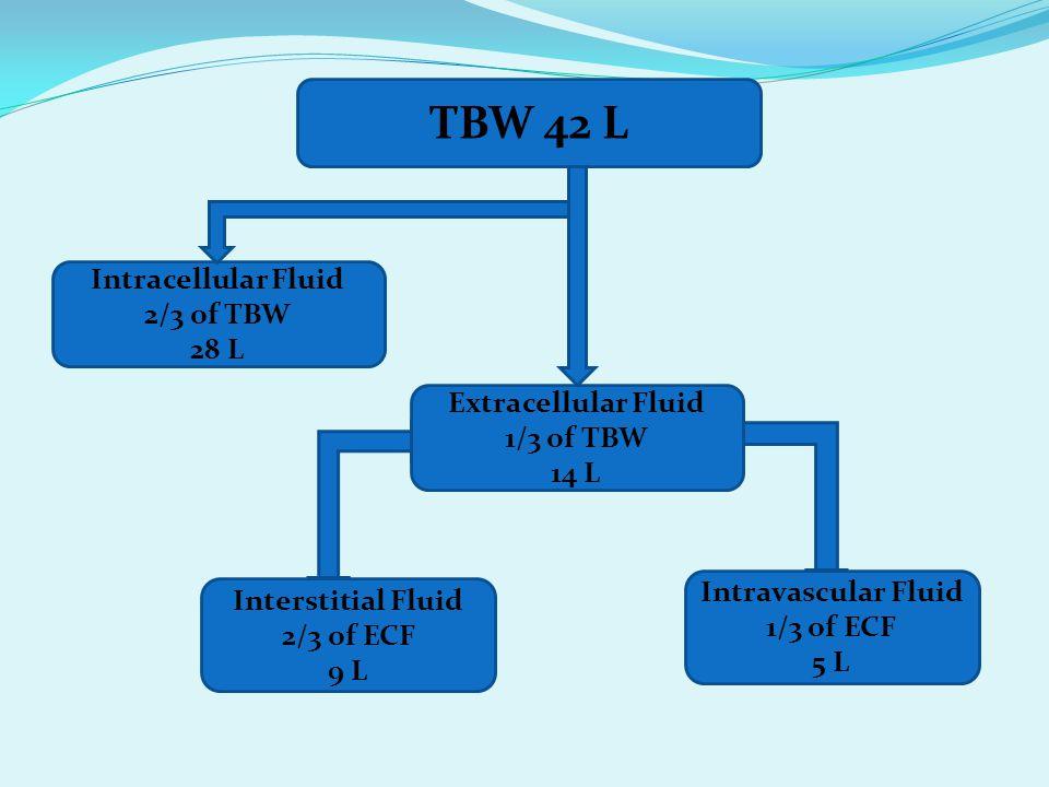 TBW 42 L Interstitial Fluid 2/3 of ECF 9 L Intravascular Fluid 1/3 of ECF 5 L Extracellular Fluid 1/3 of TBW 14 L Intracellular Fluid 2/3 of TBW 28 L