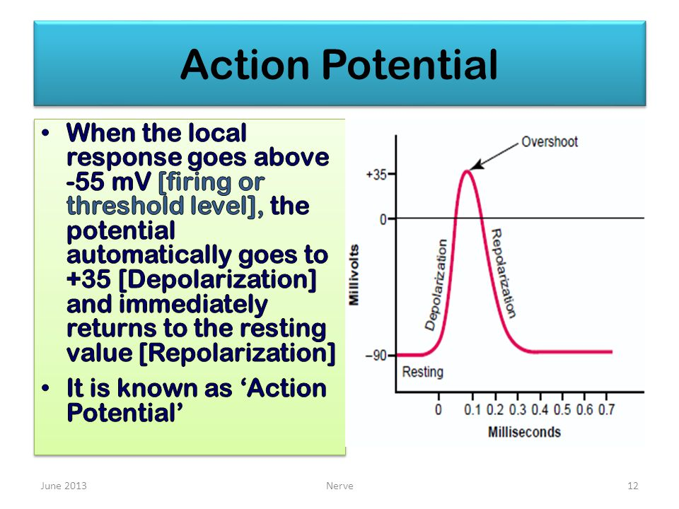 Action Potential June 2013Nerve12