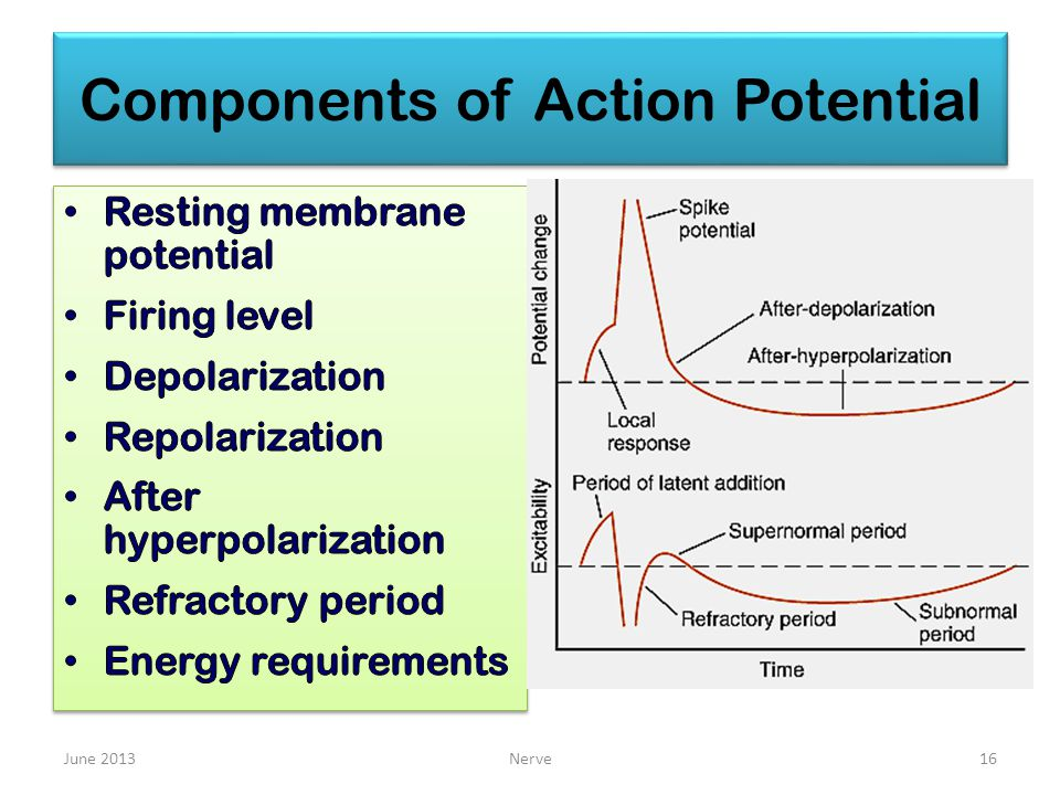 Components of Action Potential June 2013Nerve16