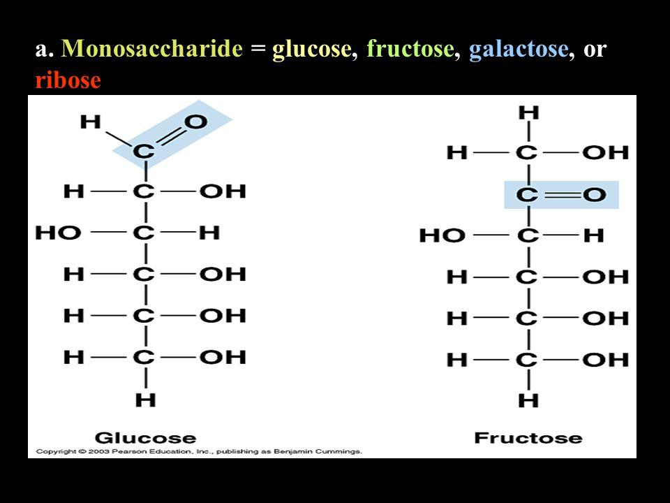 a. Monosaccharide = glucose, fructose, galactose, or ribose