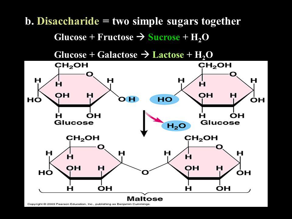 b. Disaccharide = two simple sugars together Glucose + Fructose  Sucrose + H2OH2O Glucose + Galactose  Lactose + H2OH2O