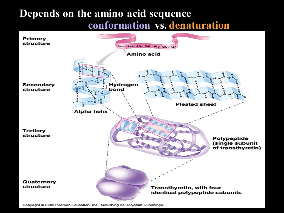 Depends on the amino acid sequence conformation vs. denaturation