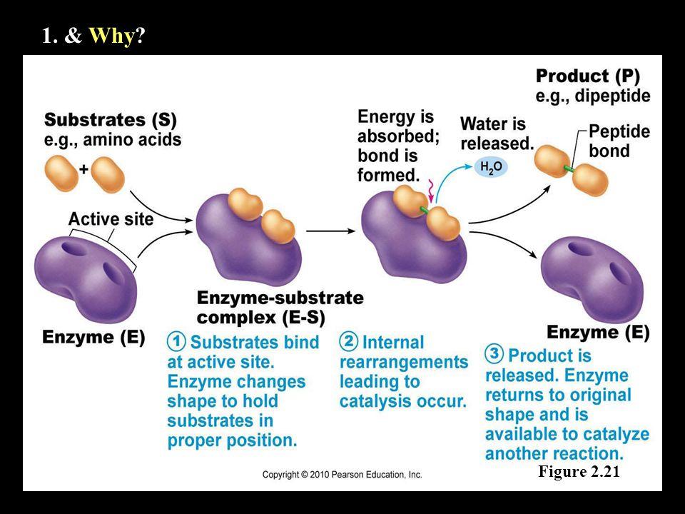 1. & Why Figure 2.21