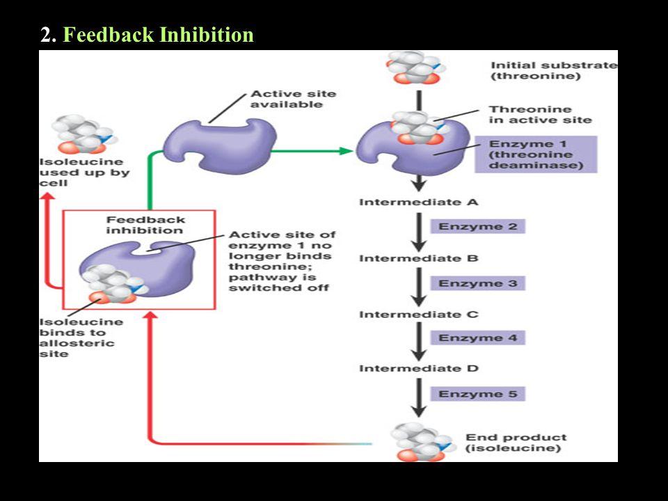 2. Feedback Inhibition