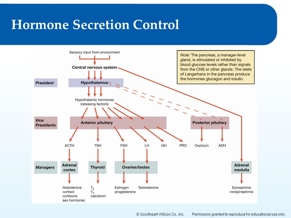 Permission granted to reproduce for educational use only.© Goodheart-Willcox Co., Inc. Hormone Secretion Control