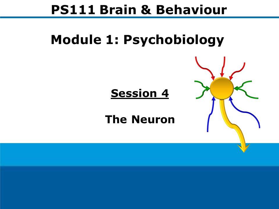 1 Session 4 The Neuron PS111 Brain & Behaviour Module 1: Psychobiology