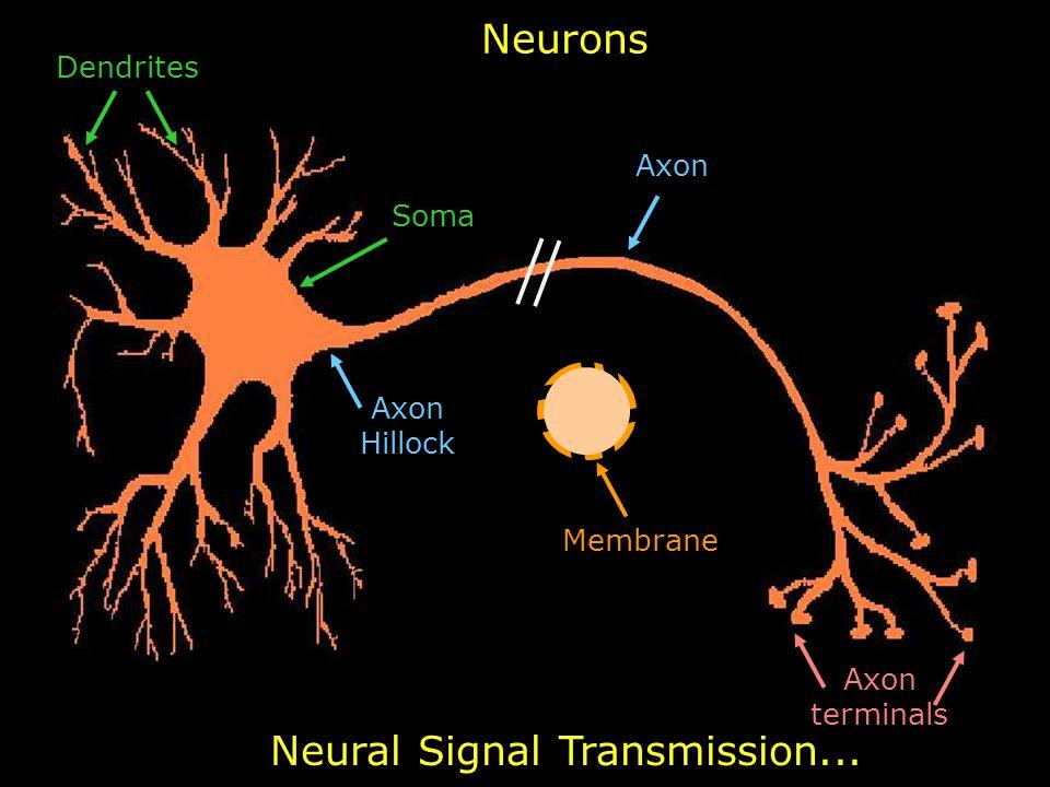 14 Neurons Axon Axon Hillock Axon terminals Soma Dendrites Neural Signal Transmission... Membrane