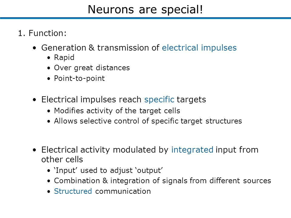 1. Function: Generation & transmission of electrical impulses Neurons are special.