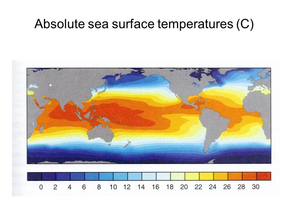 Absolute sea surface temperatures (C)