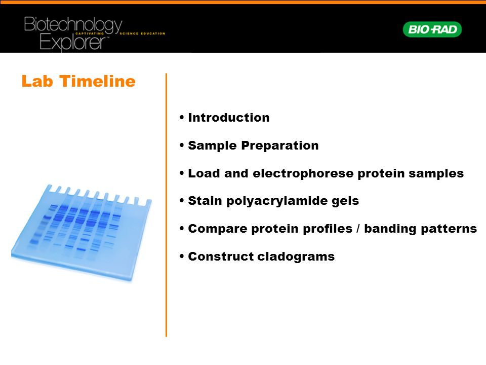 Lab Timeline Introduction Sample Preparation Load and electrophorese protein samples Stain polyacrylamide gels Compare protein profiles / banding patt