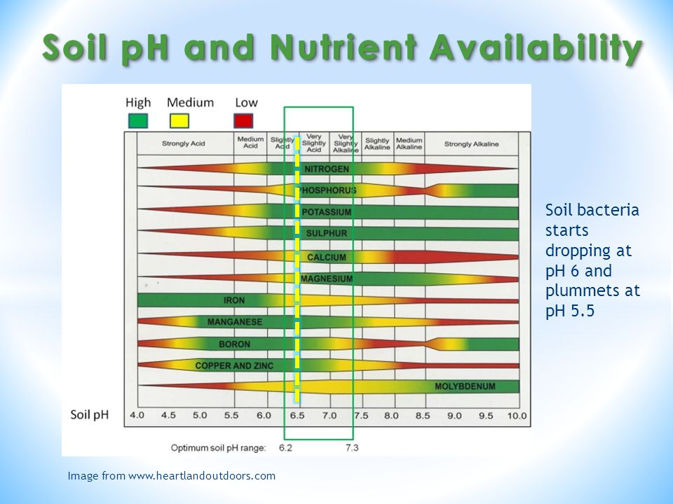 Image from www.heartlandoutdoors.com Soil bacteria starts dropping at pH 6 and plummets at pH 5.5