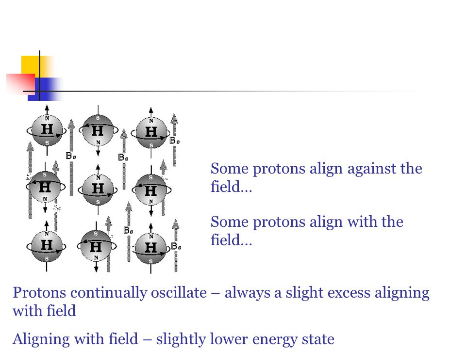Some protons align with the field… Some protons align against the field… Protons continually oscillate – always a slight excess aligning with field Aligning with field – slightly lower energy state