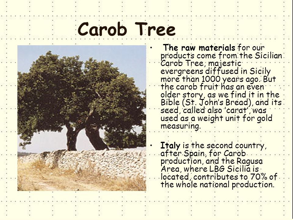 Carob Tree The raw materials for our products come from the Sicilian Carob Tree, majestic evergreens diffused in Sicily more than 1000 years ago.