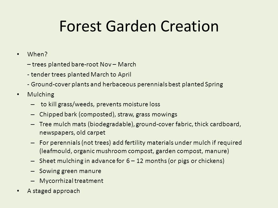 Forest Garden Creation When? – trees planted bare-root Nov – March - tender trees planted March to April - Ground-cover plants and herbaceous perennia
