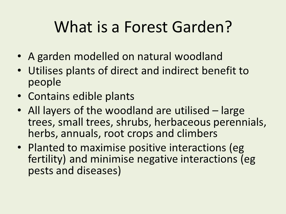 What is a Forest Garden? A garden modelled on natural woodland Utilises plants of direct and indirect benefit to people Contains edible plants All lay