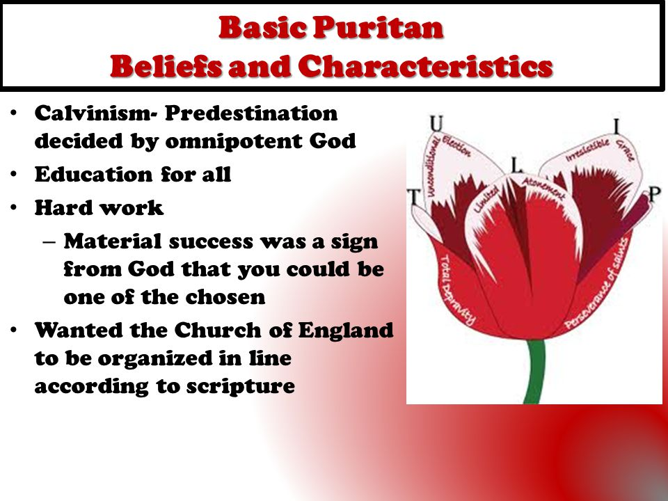 Basic Puritan Beliefs and Characteristics Calvinism- Predestination decided by omnipotent God Education for all Hard work – Material success was a sig