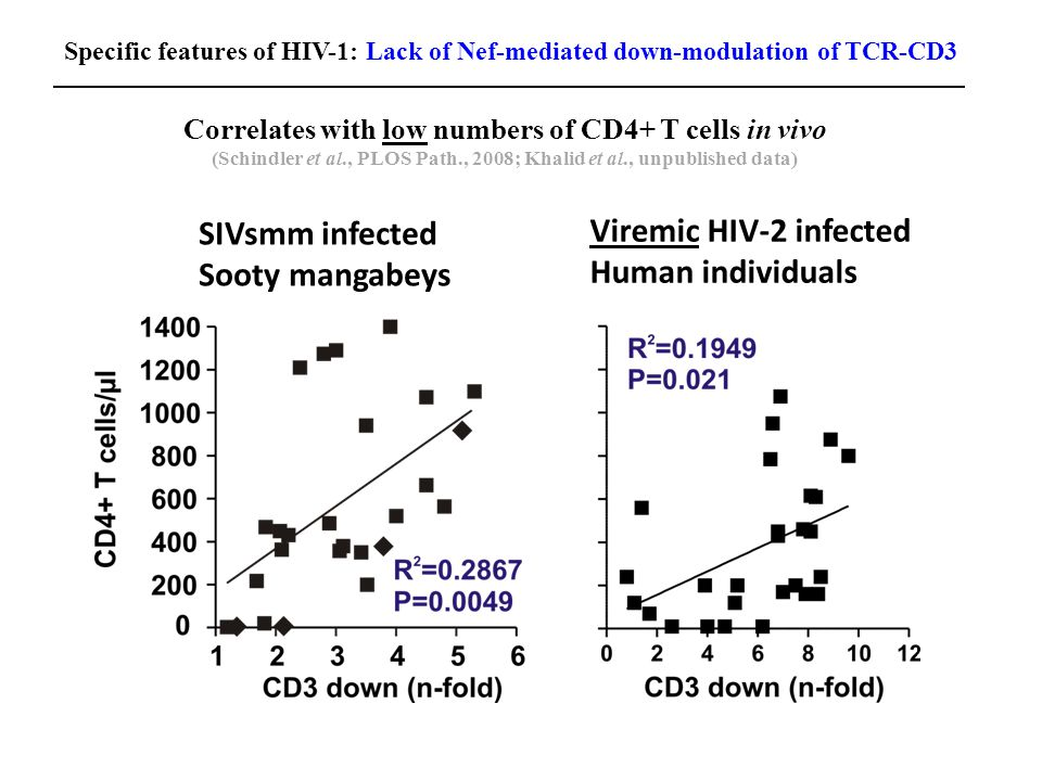 Correlates with low numbers of CD4+ T cells in vivo (Schindler et al., PLOS Path., 2008; Khalid et al., unpublished data) SIVsmm infected Sooty mangabeys Viremic HIV-2 infected Human individuals Specific features of HIV-1: Lack of Nef-mediated down-modulation of TCR-CD3