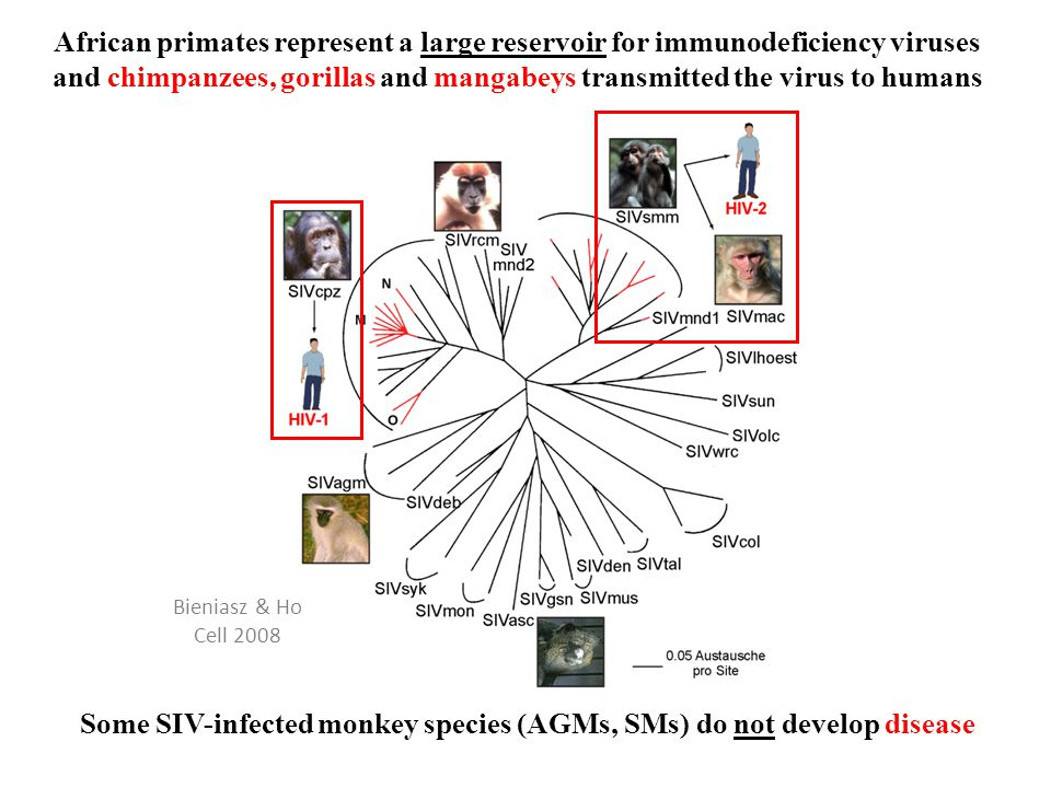 Why did HIV-1 M switch from Nef to Vpu to antagonize tetherin.