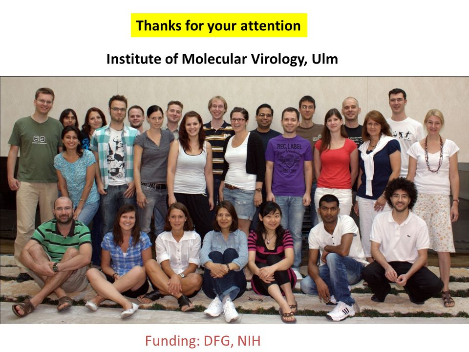 Institute of Molecular Virology, Ulm Funding: DFG, NIH Thanks for your attention