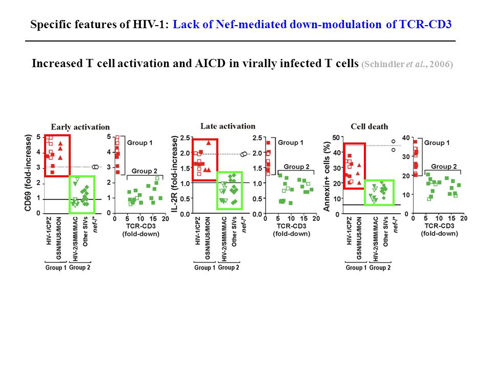 Increased T cell activation and AICD in virally infected T cells (Schindler et al., 2006) Specific features of HIV-1: Lack of Nef-mediated down-modulation of TCR-CD3