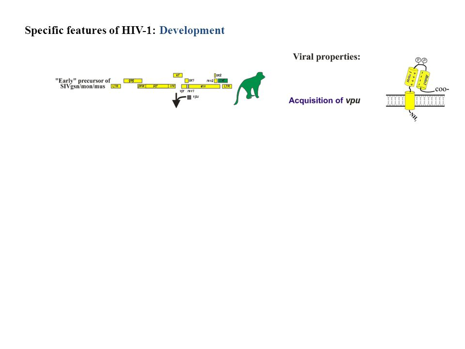 Specific features of HIV-1: Development