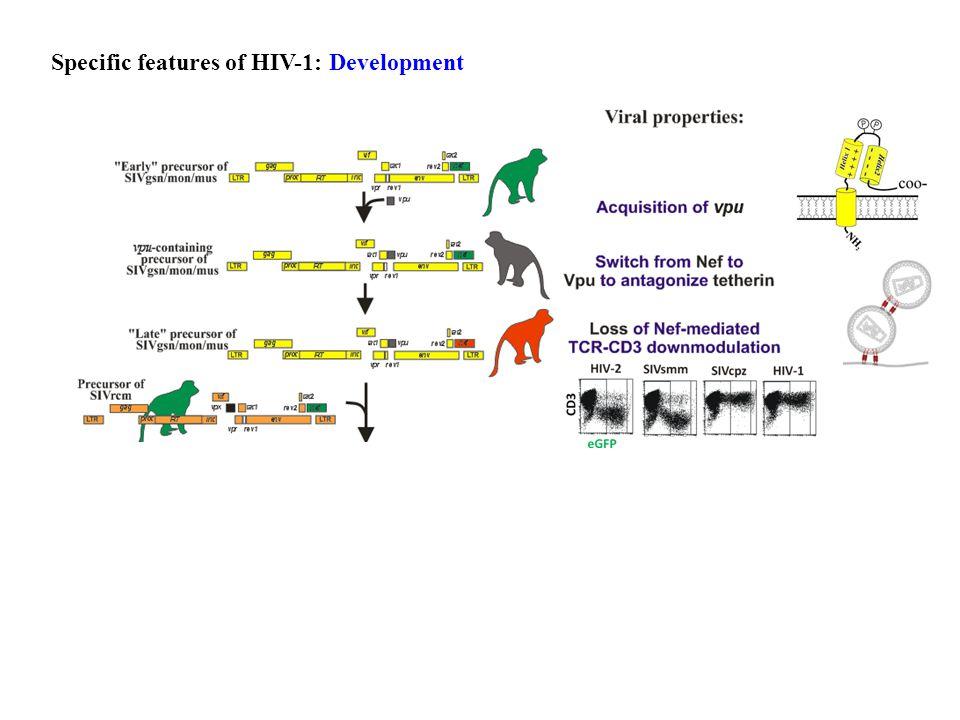 Chlorocebus sabaeus Role of Vpu & Nef-mediated down-modulation of TCR-CD3 in viral pathogenesis.