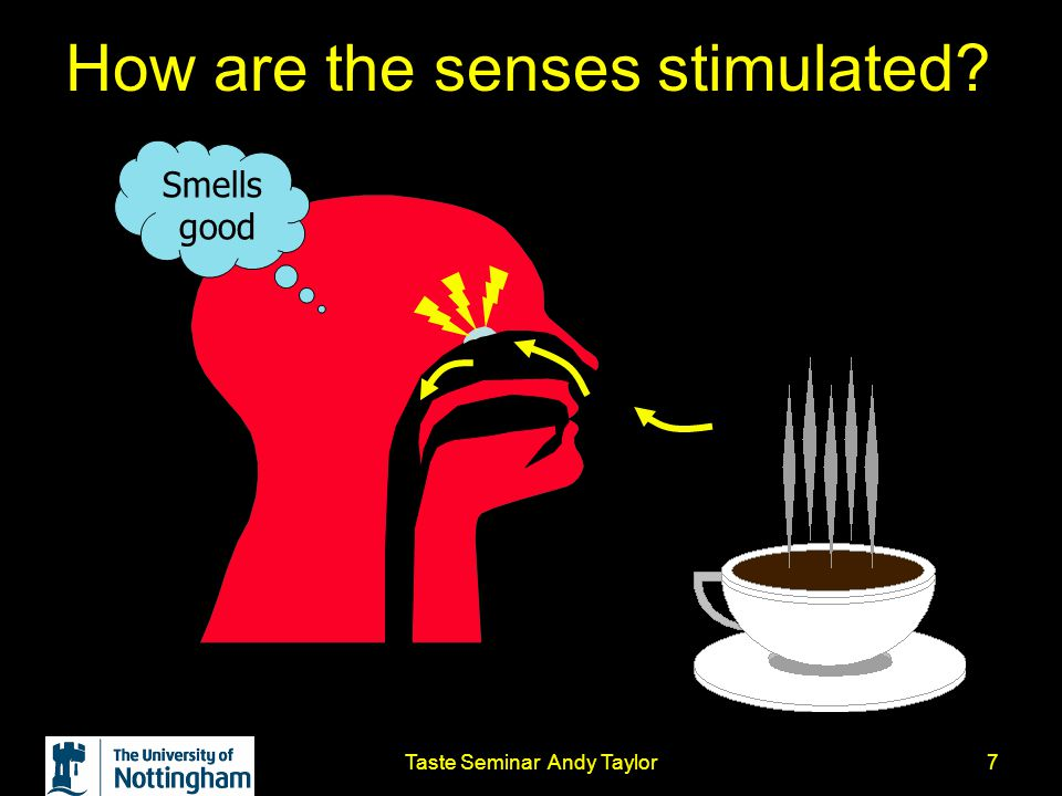 Taste Seminar Andy Taylor7 How are the senses stimulated? Smells good