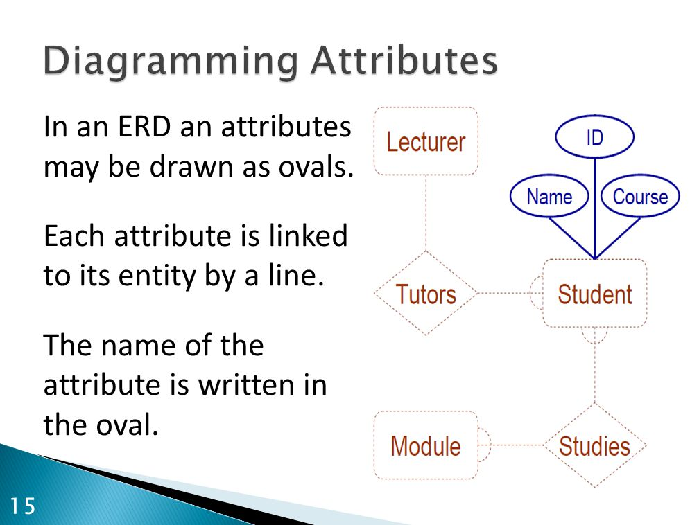 In an ERD an attributes may be drawn as ovals. Each attribute is linked to its entity by a line. The name of the attribute is written in the oval. 15