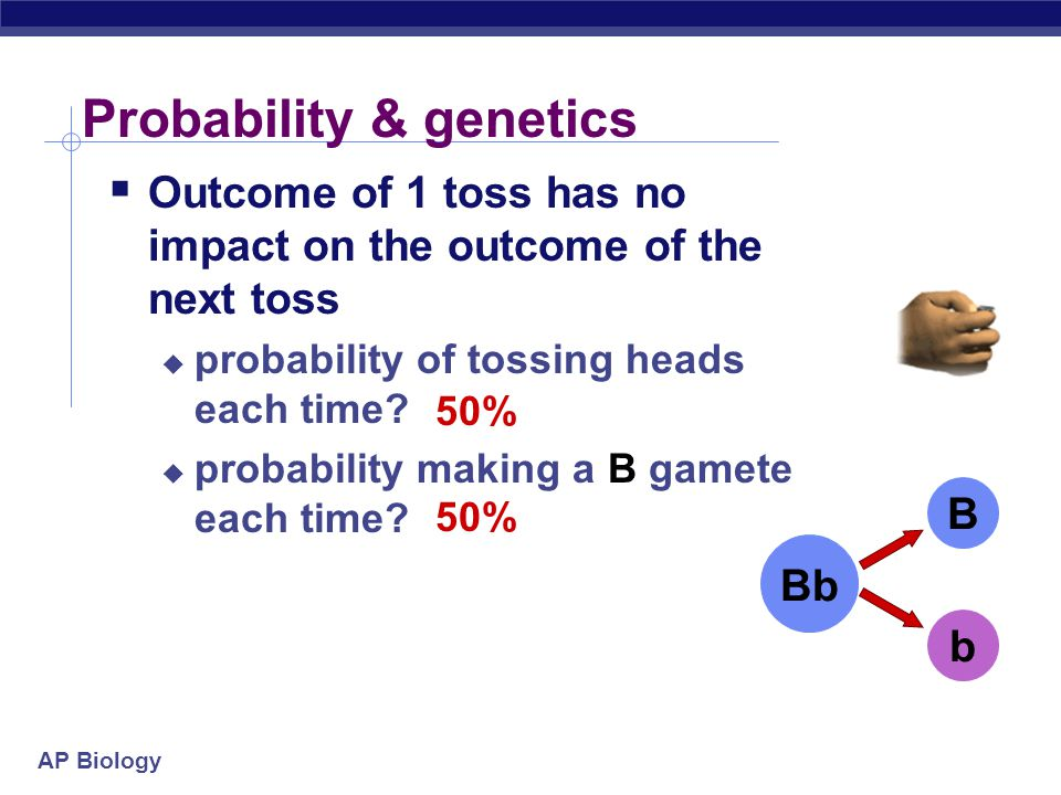 AP Biology Probability & genetics  Calculating probability of making a specific gamete is just like calculating the probability in flipping a coin 