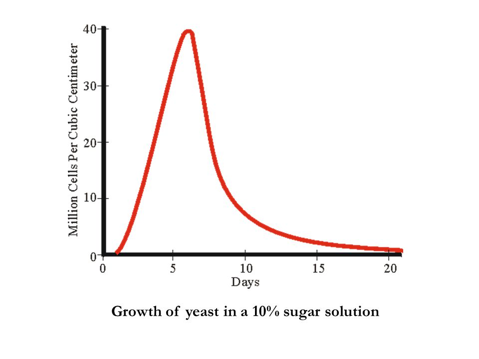 Growth of yeast in a 10% sugar solution