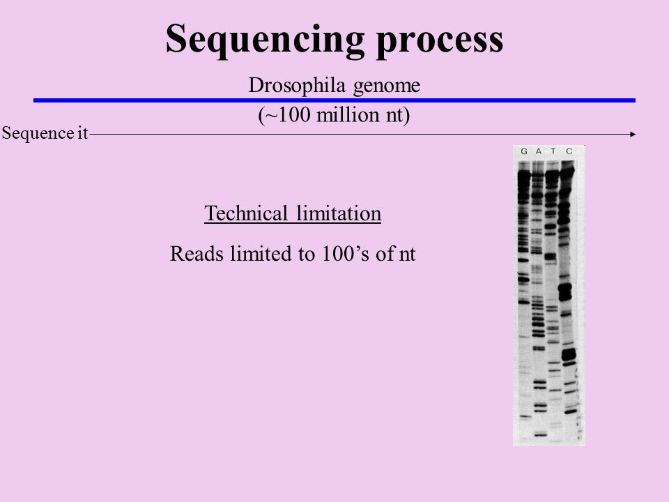Sequencing process Drosophila genome (~100 million nt) Sequence it Technical limitation Reads limited to 100's of nt