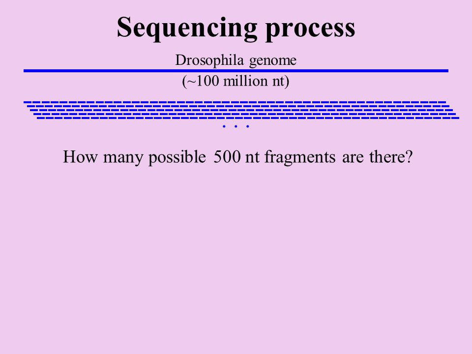 Sequencing process Drosophila genome (~100 million nt)...